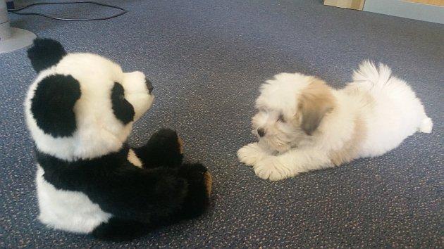 La phase primordiale pour contrer Panda